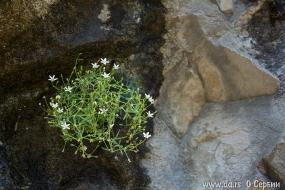 Цветы пробились сквозь скалу