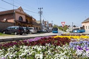 Город в цветах