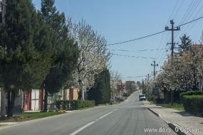 Улица Виноградарска