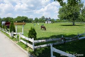 Место для занятий конным спортом