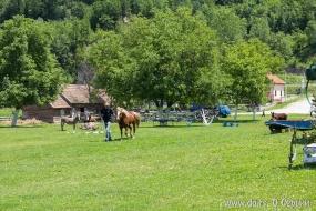Можно покататься на лошадях