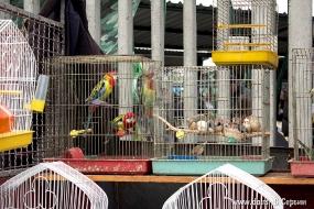 Птички мерзнут
