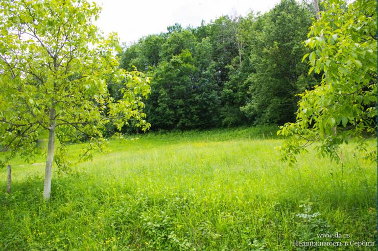 Участок на горе Гучево со своим лесом