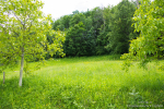 0118, Участок на горе Гучево со своим лесом