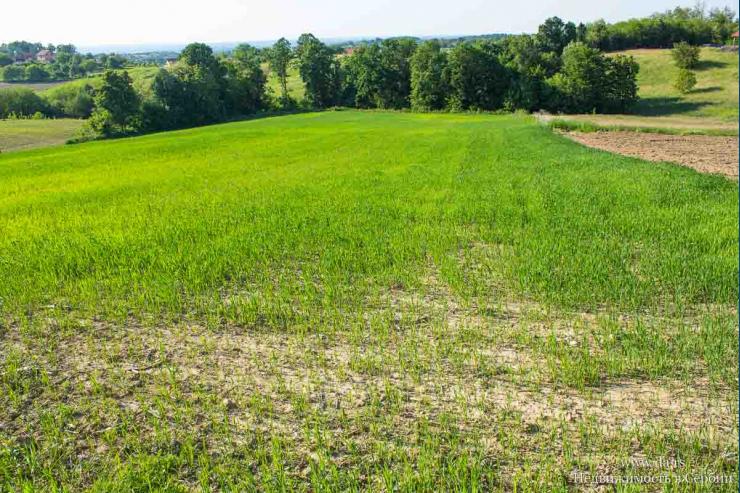 Ровный участок сельскохозяйственной земли 2 га в Лознице